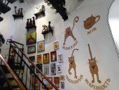 Зеленоградск Музей кошек