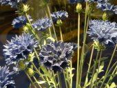 Ermitāža. Porcelāna ziedi.