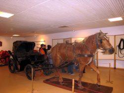 Музей лошади. Экспозиция История лошади.
