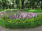 Ясная Поляна Цветники любила Софья Андреевна