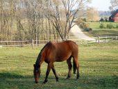 Музей лошади в деревне Нюронис