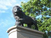 Шведский лев