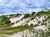 Приморские дюны