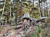 Лес на Видземском побережье